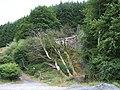 Nantyrhwch - near Dolgoch, Powys - geograph.org.uk - 370124.jpg