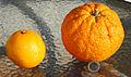 Naranja Almeria.JPG