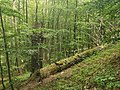 Nationalpark Hainich craulaer Kreuz 2020-06-03 7.jpg