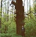 Naturdenkmal Dolgener Eiche 2.jpg