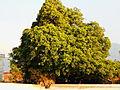 Nature form Bhaktapur 09.JPG