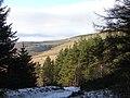 Near the edge of Hafren Forest - geograph.org.uk - 1113040.jpg