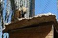 Negev Zoo Beersheva Israel IMG 0587b.JPG