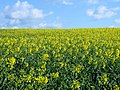 Nene Valley - between Elton and Wansford - April 2014 - panoramio.jpg