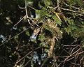 Nest of Tit-hylia 18.JPG