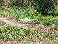 Neuer Botanischer Garten - Frühlingswald 03.jpg