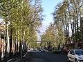 New Life on X Pahlavi Ave.Trees, 2011 Spring - panoramio (5).jpg