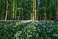 Nordkirchen, Naturschutzgebiet Ichterloh -- 2018 -- 2290.jpg