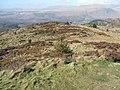 Northern slope of Irton Pike - geograph.org.uk - 746616.jpg