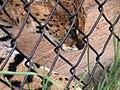 Oaklawn Farm Zoo, May 16 2009 (3538923919).jpg