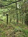 Old Fence Line - geograph.org.uk - 1443484.jpg