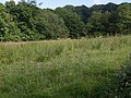 Orchids in a field - geograph.org.uk - 472177.jpg