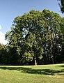 Orlová, zámecký park (4).JPG