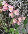 Orquídeas Soatenses.jpg