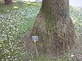 Orto botanico di Napoli 98.jpg