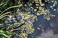 """Osterholz-Scharmbeck, Naturschutzgebiet """"Breites Wasser"""" -- 2018 -- 3009.jpg"""