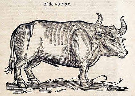 "The ""Ure-Ox"" (Aurochs) by Edward Topsell, 1658 OftheOX.jpg"