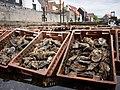 Oyster pits in Yerseke Netherlands 01.jpg