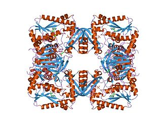 GMP synthase (glutamine—hydrolysing) - Image: PDB 1gpm EBI