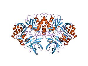 Glycine cleavage system - crystal structure of a component of glycine cleavage system: t-protein from pyrococcus horikoshii ot3 at 1.5 a resolution