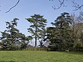 Paddock at Ilketshall Hall - geograph.org.uk - 983508.jpg