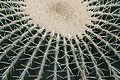 Palmengarten - Kaktus 2.jpg