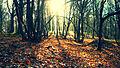 Parc naturel régional de la Haute Vallée de Chevreuse, Foret de Rambouillet - Soleil d'automne.jpg