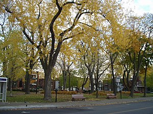 Ville-Émard - Garneau Square in the fall