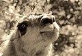 """Parcul de Animale - """"Moara de Vant"""" (7403411800).jpg"""