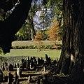Park; luchtwortels van moerascipres - Ambt Delden - 20389112 - RCE.jpg