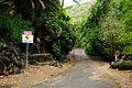 Path to Palm Garden & Hibiscus Hybrids (5216412509).jpg