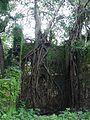 Peeraath (Malayalam- പേരാത്) (1126969438).jpg
