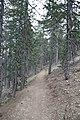 Persephone Nature Trail, Troodos, Cyprus - panoramio (14).jpg