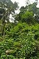 Perspektiven des Parque Nacional do Iguaçu 26 (21928086088).jpg