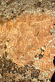 Petroglyph aka pictograph (ascribed to sheepeater era).jpg