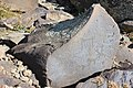 Petroglyphs from Ukhtasar 15092019 (342).jpg