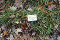 Phleum pratense - Botanischer Garten - Heidelberg, Germany - DSC00879.jpg