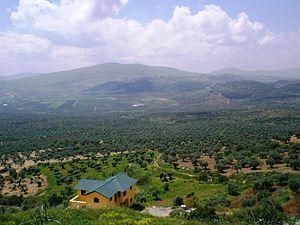Maghar, Israel - Olive groves in Maghar