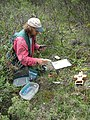 Plant ecologist Carl Roland collects soil temperature and moisture data while performing soil sampling protocol in Denali NP. (8446139444).jpg