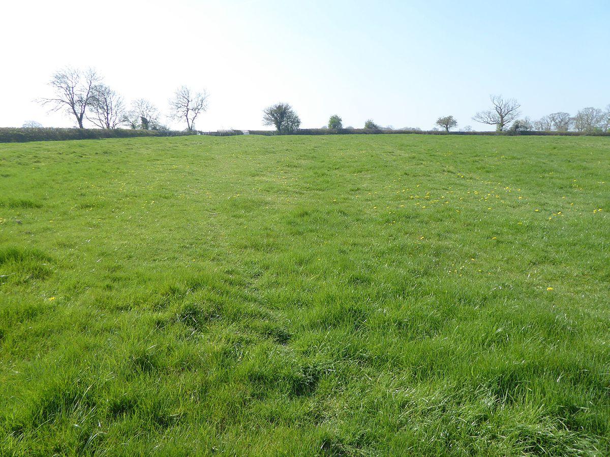 Plumpton Pasture - Wikipedia