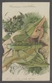Pneumora - Print - Iconographia Zoologica - Special Collections University of Amsterdam - UBAINV0274 066 02 0002.tif
