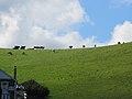 Port Isaac Hills, Cornwall (461139) (9458527326).jpg