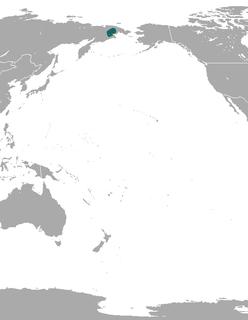 Portenkos shrew Species of mammal