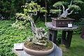 Pražská botanická zahrada, japonská zahrada, Nádvorní 134, Praha - Troja 04.JPG