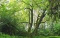 Prienai forest.png
