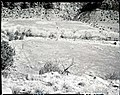 Proposed site for new Mission 66 Visitor Center and Museum and administration building. ; ZION Museum and Archives Image 004 (4791d79e0430424881272de181103510).jpg