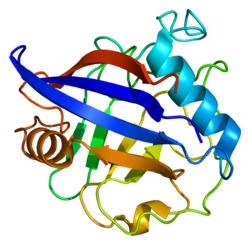 Protein PPIG PDB 2gw2.png