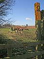 Public Footpath near Pickwell - geograph.org.uk - 147168.jpg