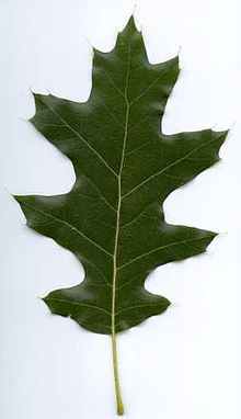 List Of Woody Plants Of Soldiers Delight Wikipedia