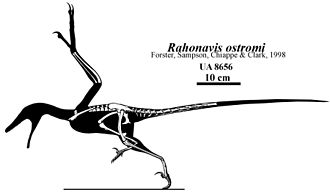 Rahonavis - Skeletal restoration